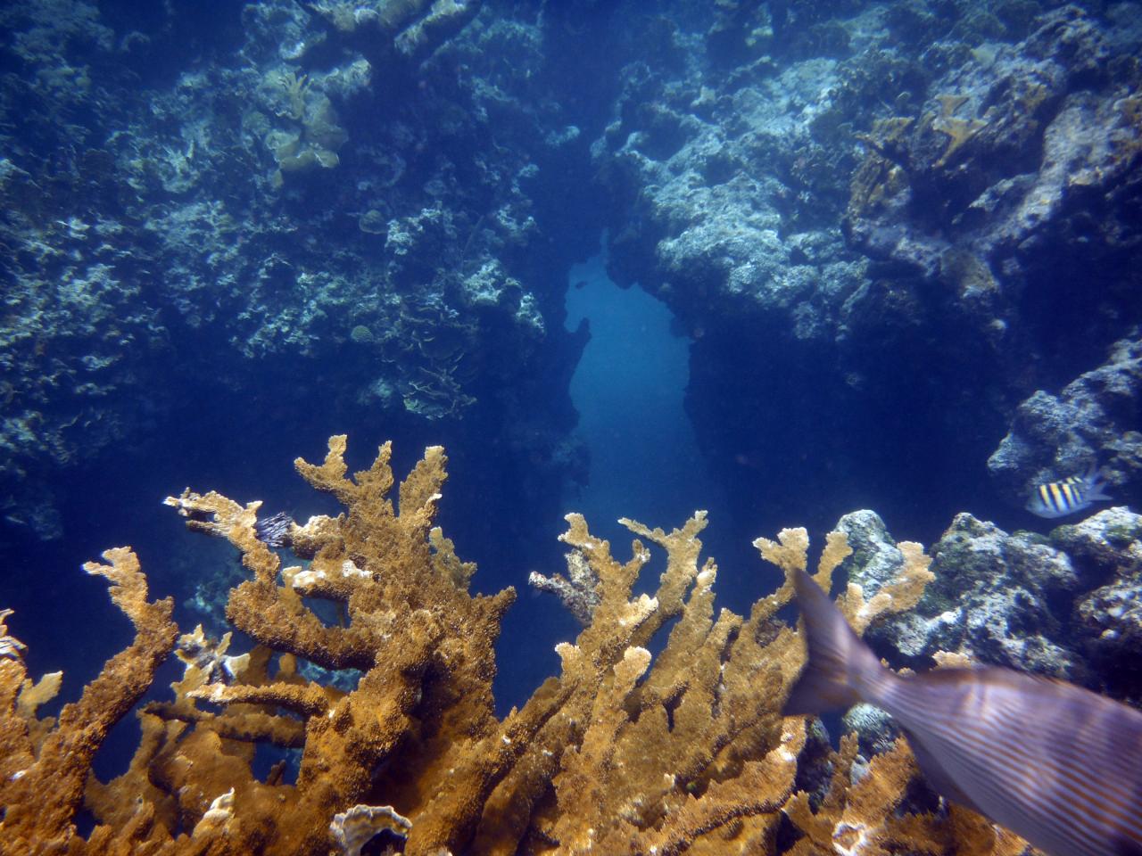 Jibacoa  Cuba  U2013 Du 19 Au 27 Mai 2012  U2013  Plongeeenapnee