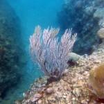 Plongée à Marigot Bay