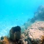 Plongée à Bequia avant le départ