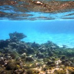 Première plongée sur la barrière de corail