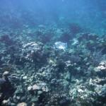 Plongée à l'extérieur de la barrière de corail des Tobago Cays