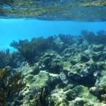 Plongée du matin sur la barrière de corail des Tobago Cays
