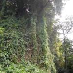 La végétation sur les sentiers