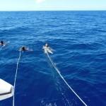 Se faire tirer par le catamaran