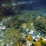 Banc de poissons croisé en route vers l'anse Noire