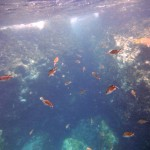 Deuxième plongée à la caverne de chauves-souris