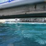 Le grillage de l'enclos à dauphin