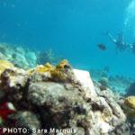 Photo_Dive6
